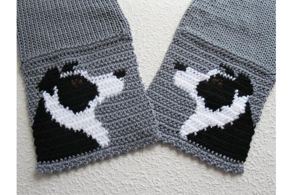cute border collies